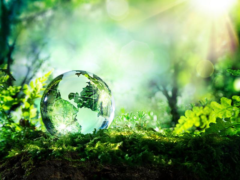 地球形,森林,美国,概念,环境,地球日,环境保护,苔藓,可持续资源,地球