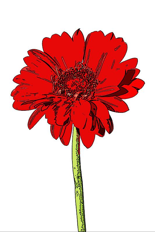 多色调分色印,红色,非洲雏菊,垂直画幅,艺术,波普风,无人,色彩鲜艳,抽象,白色背景