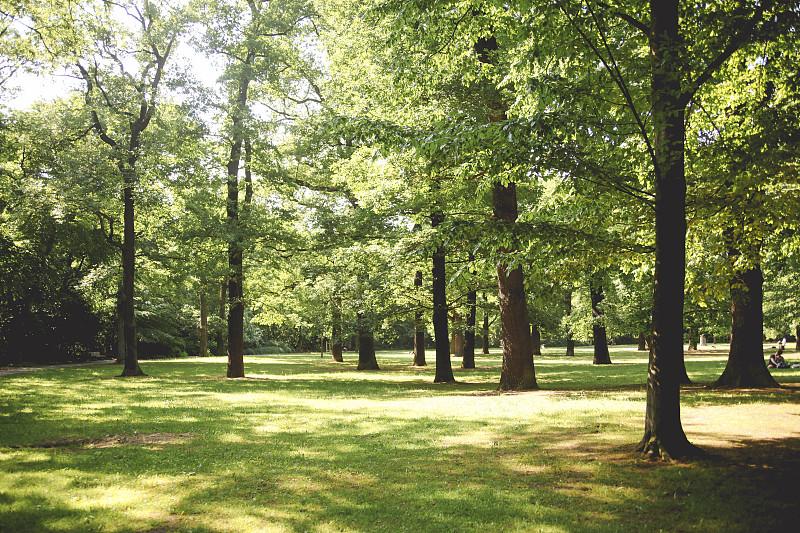 柏林,景观设计,树荫,提根湖,公园,草,森林,环境保护,自动后期制作过滤器,散焦