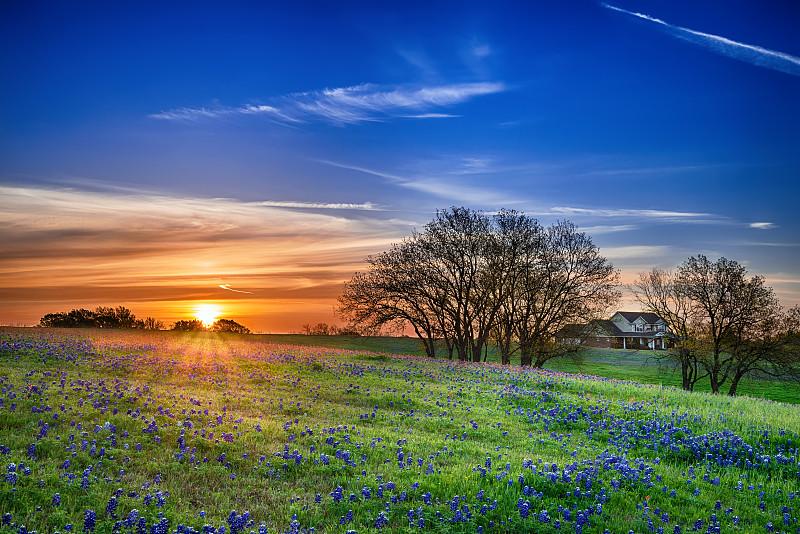 得克萨斯羽扇豆,田地,矢车菊,德克萨斯,田园风光,野花,地形,风景,春天,天空