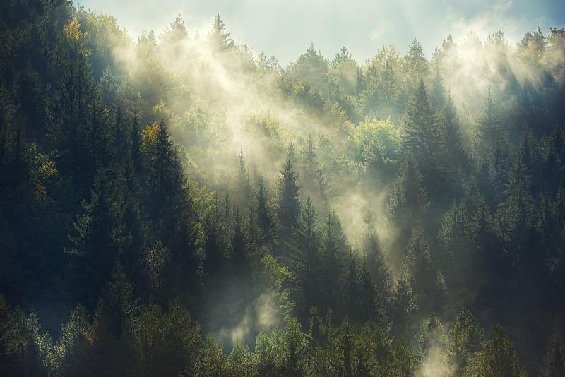 雾,森林,卡帕锡安山脉,树林,杉树,露水,风景,景观设计,地形,山