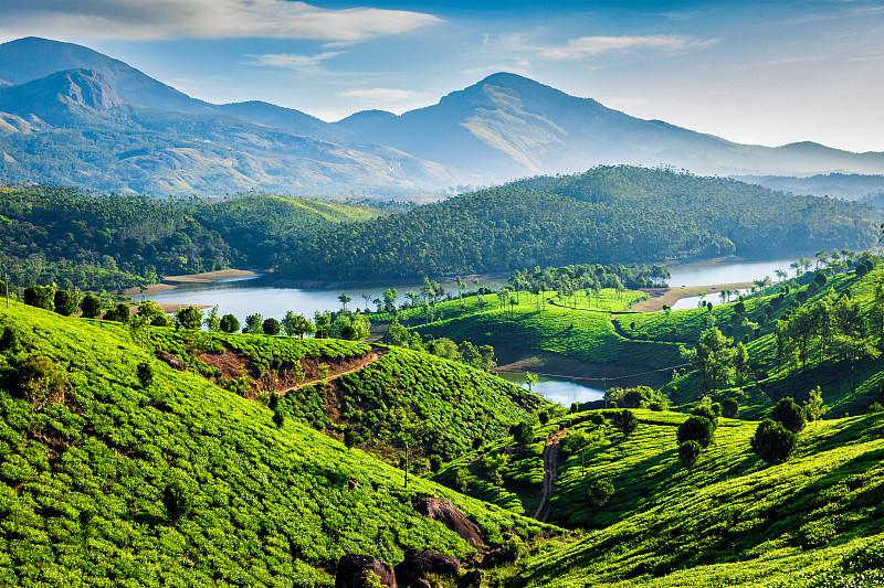 喀拉拉邦,印度,山,茶树,河流,慕那尔,种植园,枝繁叶茂,山脉,风景