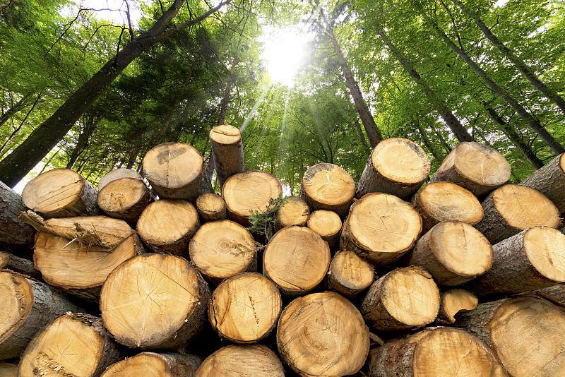 木制,圆木,森林,背景,褐色,水平画幅,能源,无人,木材,山毛榉树