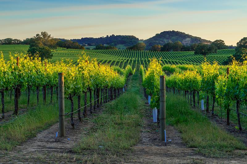 索那玛郡,葡萄酒,天空,美,葡萄酒厂,水平画幅,夏天,户外,草,那帕谷