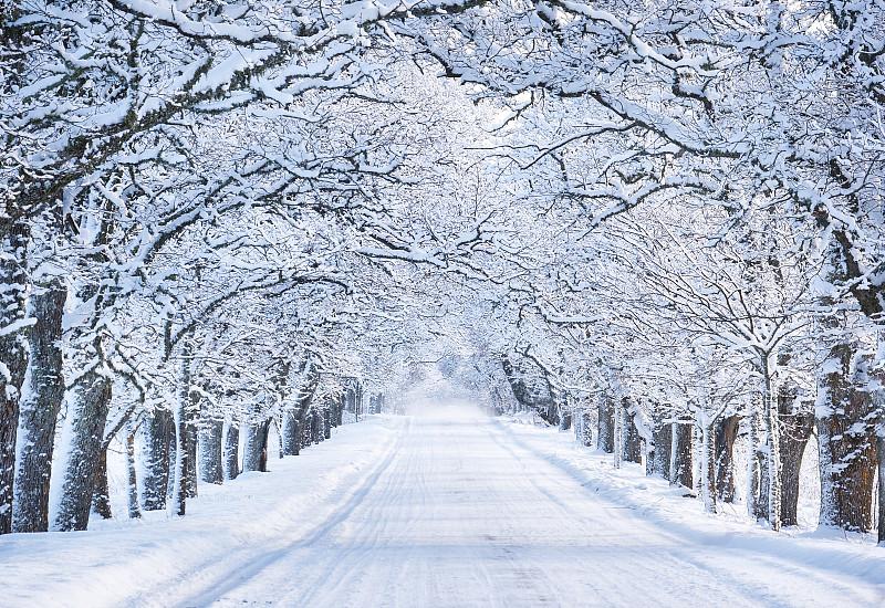 大风雪,巷,早晨,单车道,路,爱沙尼亚,地形,风景,雪,森林