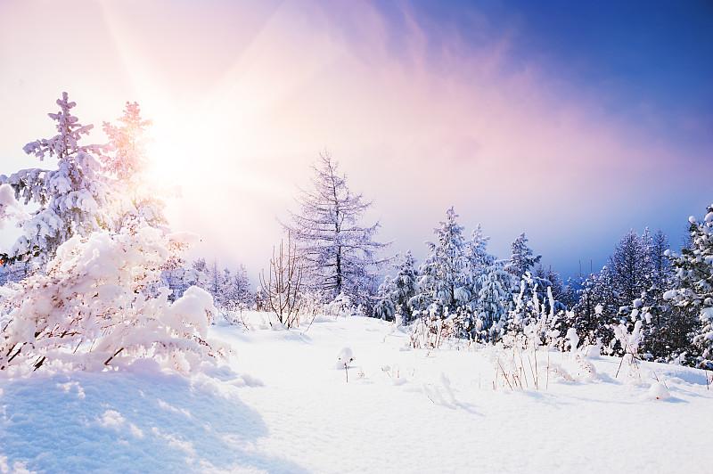 雪,冬天,森林,天空,白色,十二月,新年,新年前夕,松科,雪花