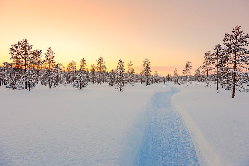 冬天,地形,自然美,森林,大风雪,天空,新的,雪,现代,白色