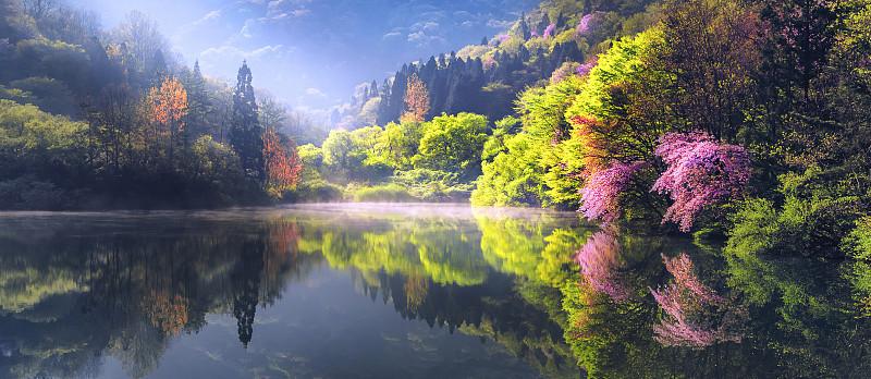 早晨,湖,秘密,烟,美,未来,水平画幅,樱花,樱桃,无人