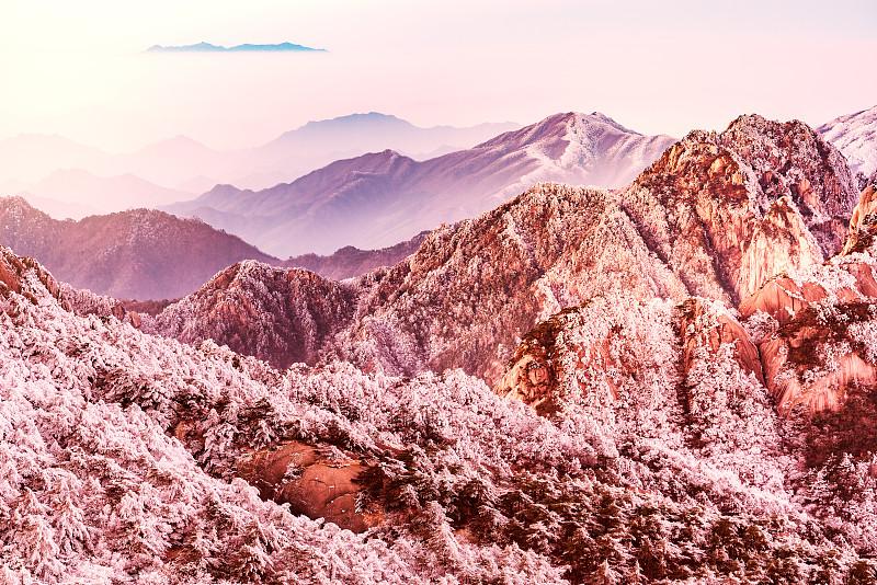 黄山山脉,国家公园,地形,安徽省,松林,山脊,杉树,松科,松树,东