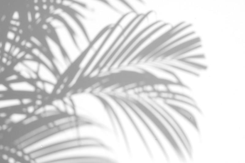 阴影,棕榈叶,棕榈树,复叶,植物园,叶子,植物学,热带气候,热带树,环境