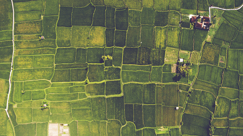 航拍视角,地形,飞蛙,格林菲尔德,田园风光,农场,葡萄收获,夏季系列,美国,草原