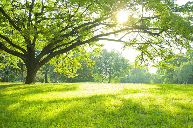 公园,夏天,草原,主页,广场,草坪,可爱,庭院,植物茎