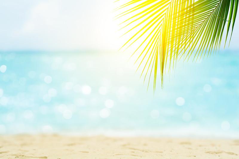 海洋,背景虚化,水,天空,风,沙子,旅行者,夏天,光,棕榈树