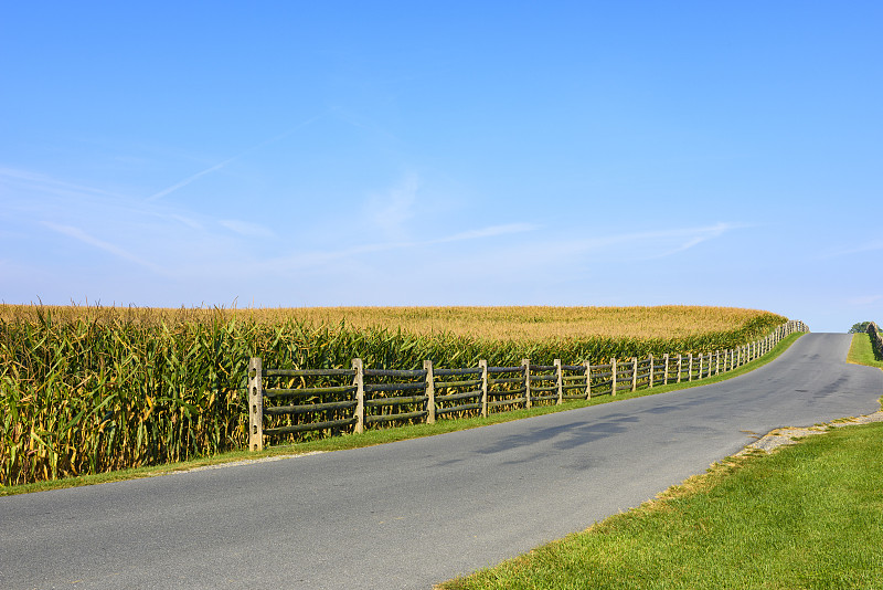 夏天,田地,玉米,乡村路,留白,水平画幅,无人,早晨,户外,农作物