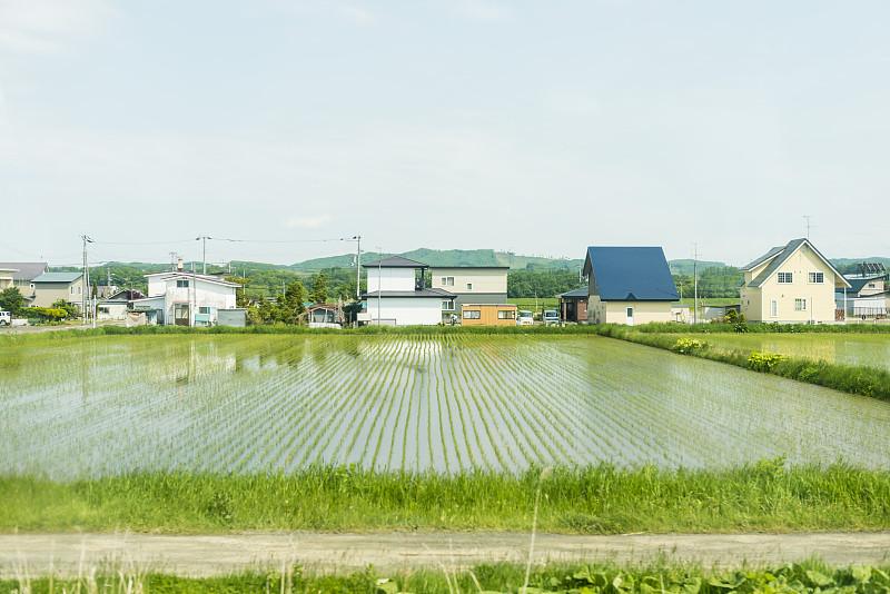 北,北海道,稻田,田园风光,温室,水灾,极端天气,日本,农业,田地