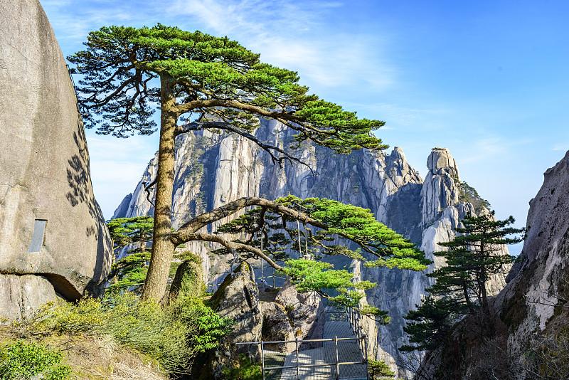 松树,阴阳符,公园,水平画幅,山,传统,古老的,旅行者,户外,干净