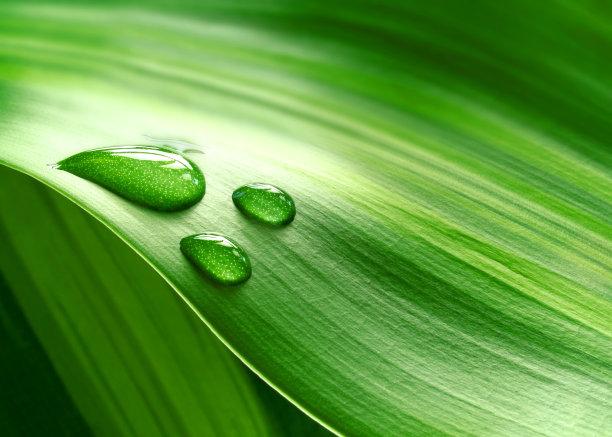 树叶上的水滴