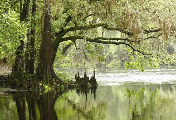 河流美国水松水平画幅