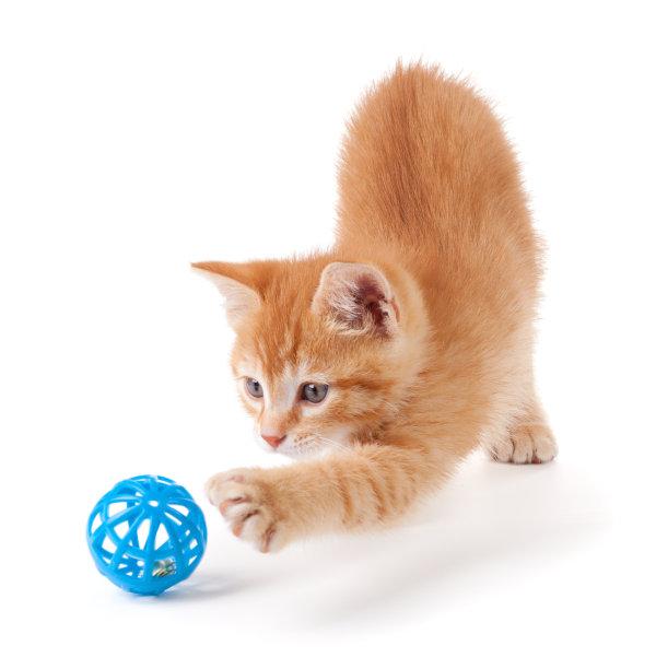 玩球的橘猫