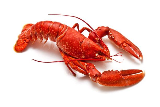 白色背景的大龙虾