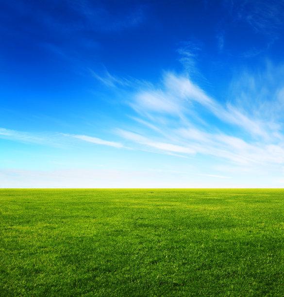 天空草绿色