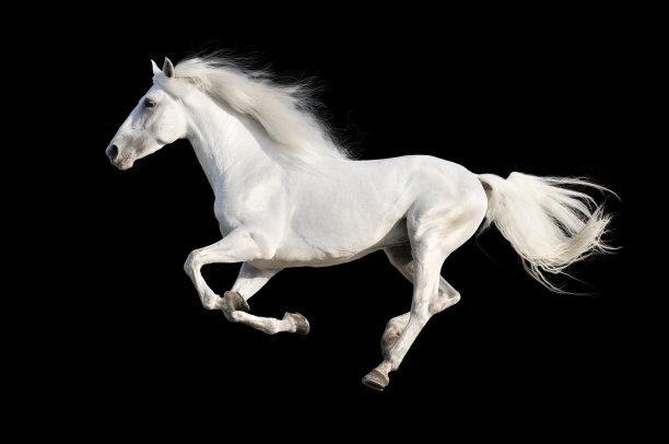 黑色背景的白马