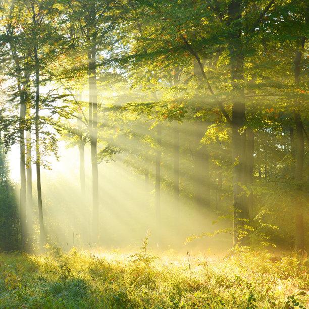 黎明森林枝繁叶茂
