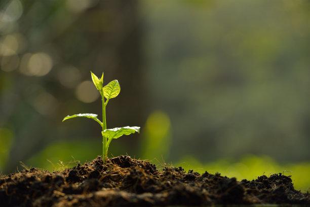 破土而出的嫩芽