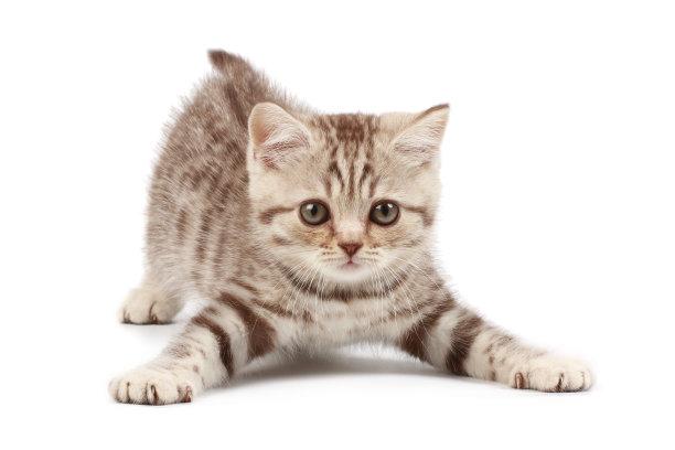 小奶猫可爱姿势