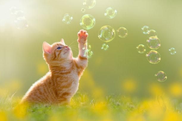 玩泡泡的小橘猫