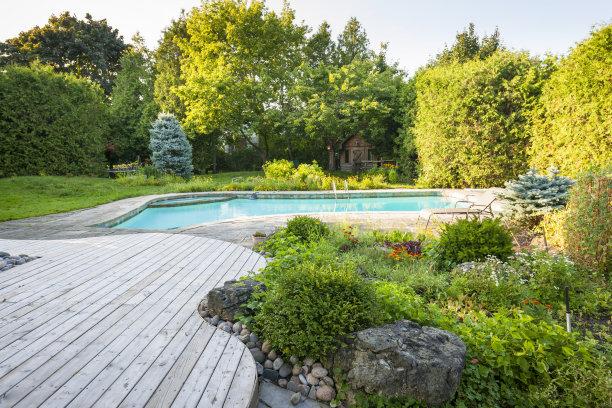 游泳池菜园灌木