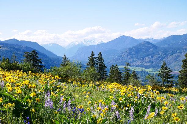 漫山遍野的花朵
