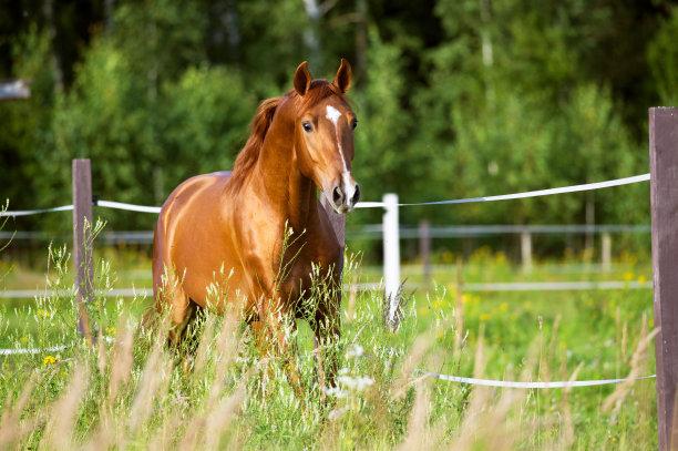 绿地里的马
