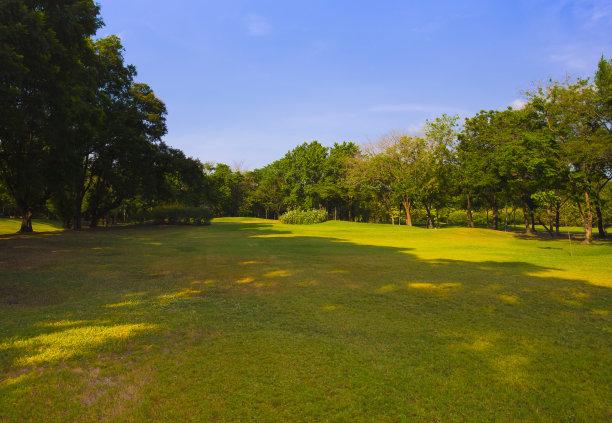 绿色,公园,美