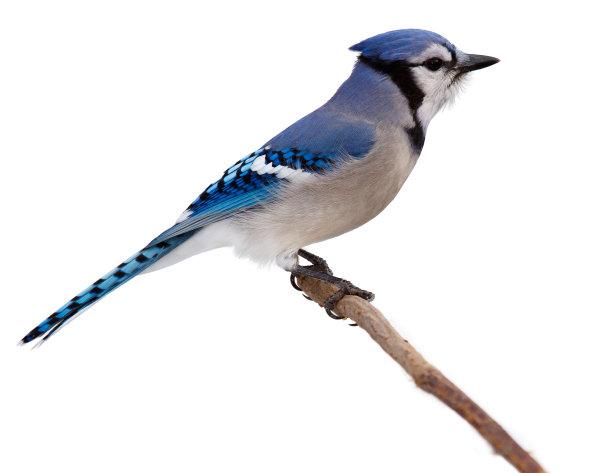 鸟类野生动物