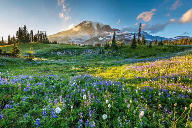 山脉的草地