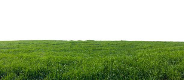 一大片草地