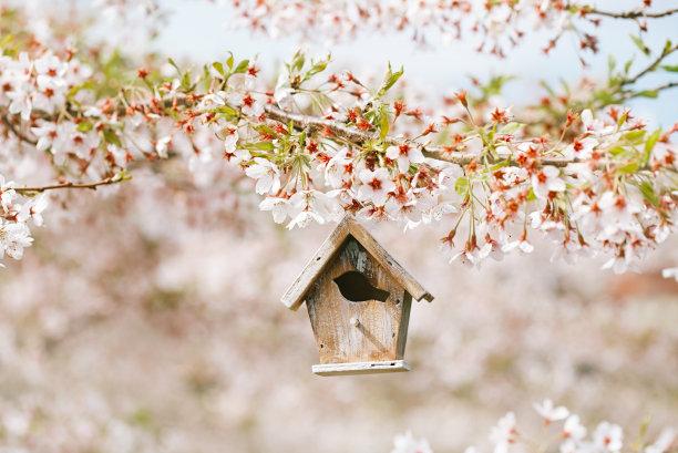 樱桃和鸟巢