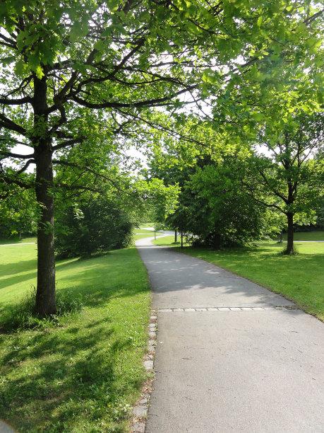 自然,绿色,步行道路