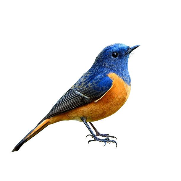 青蓝色的鸟类
