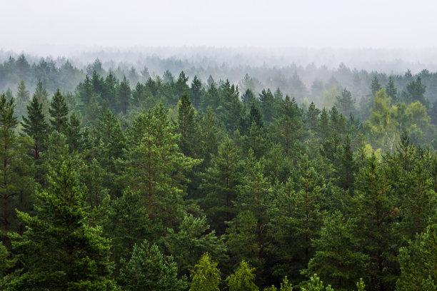 雾森林在上面