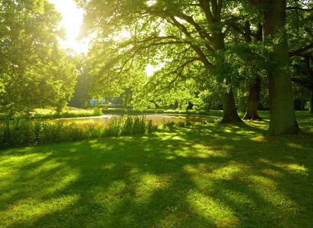 公园的夏天