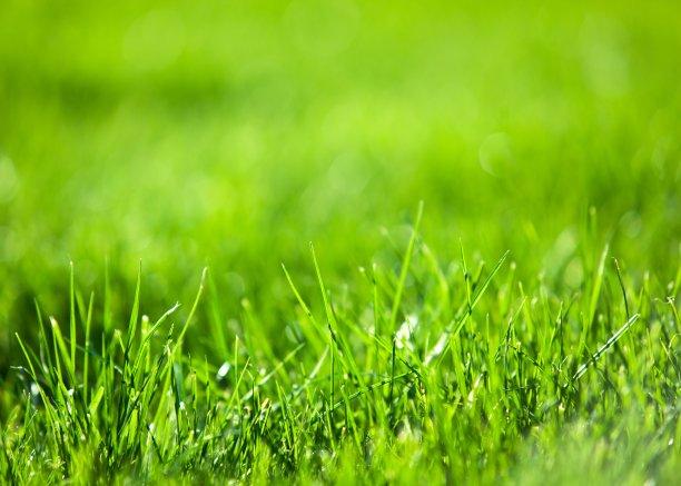 茂盛的草地