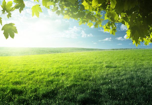 绿色的青草地