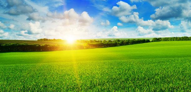 天空田地小麦