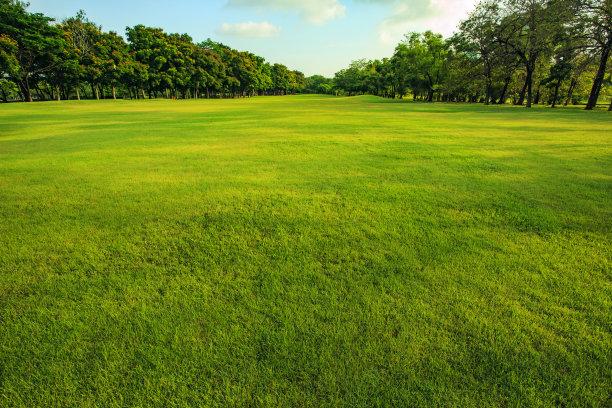 公园早晨草