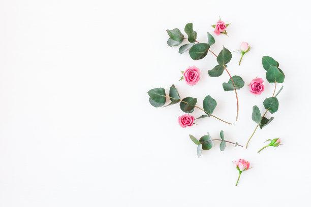 玫瑰枝图片