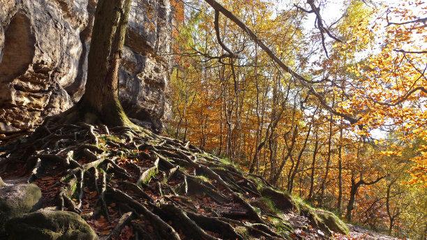 根部秋天森林