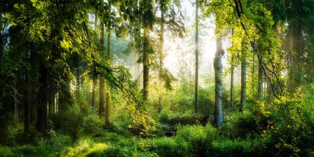 森林水平画幅林区