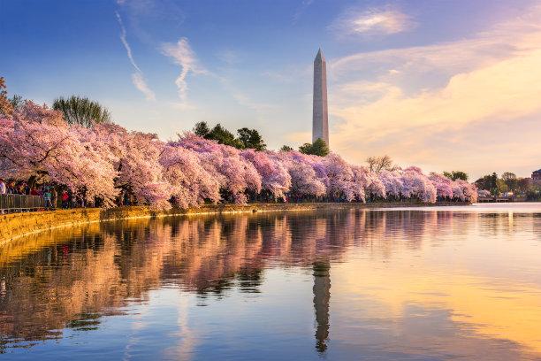 春天的华盛顿特区